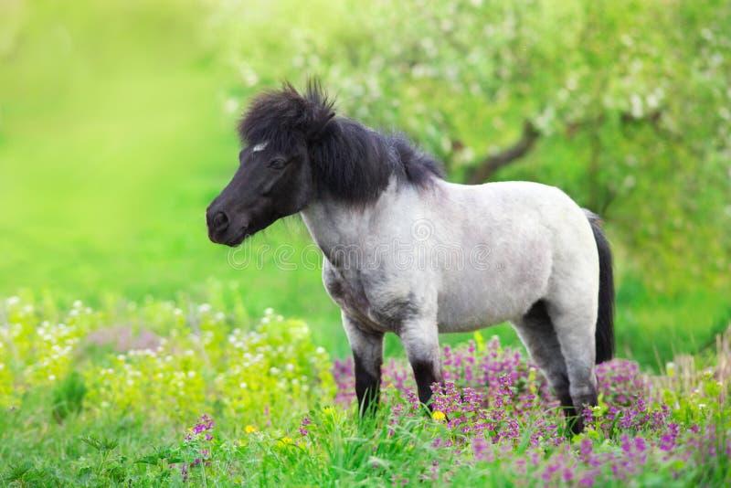 Poney in bloemenweide royalty-vrije stock afbeeldingen