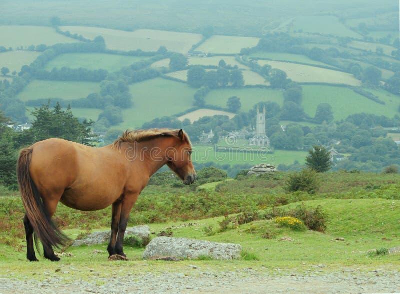 Poney boven op heuvel royalty-vrije stock foto
