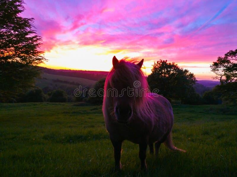 Poney coloré avec le coucher du soleil images libres de droits