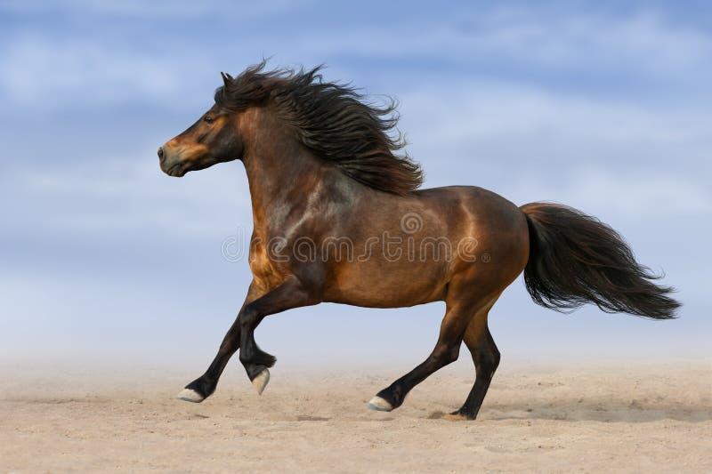 Poney couru en sable images stock
