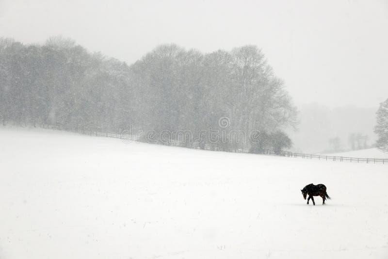 Poney dans la neige images stock