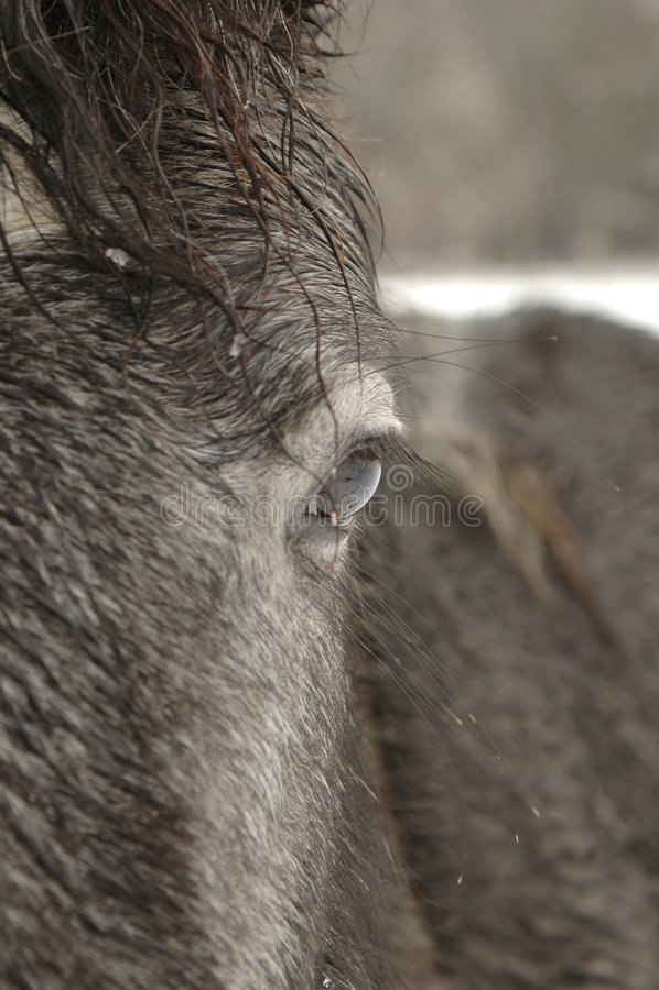 Poney de l'hiver photographie stock