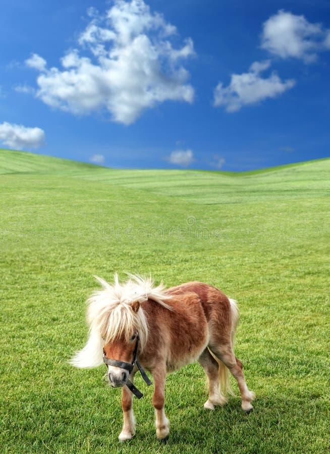Poney en nature photographie stock libre de droits