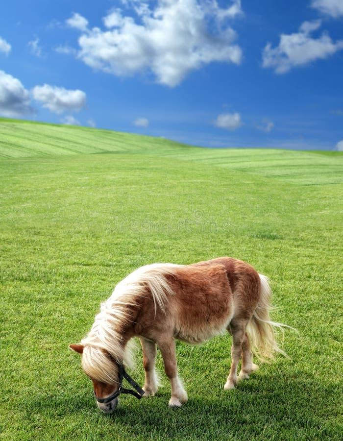 Poney en nature photos libres de droits