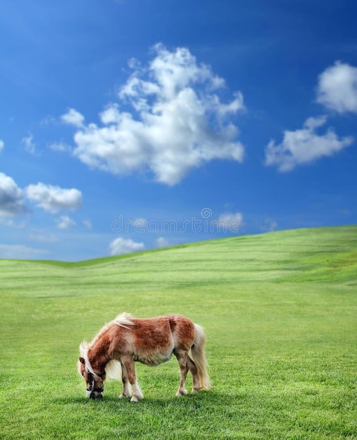 Poney en nature photos stock