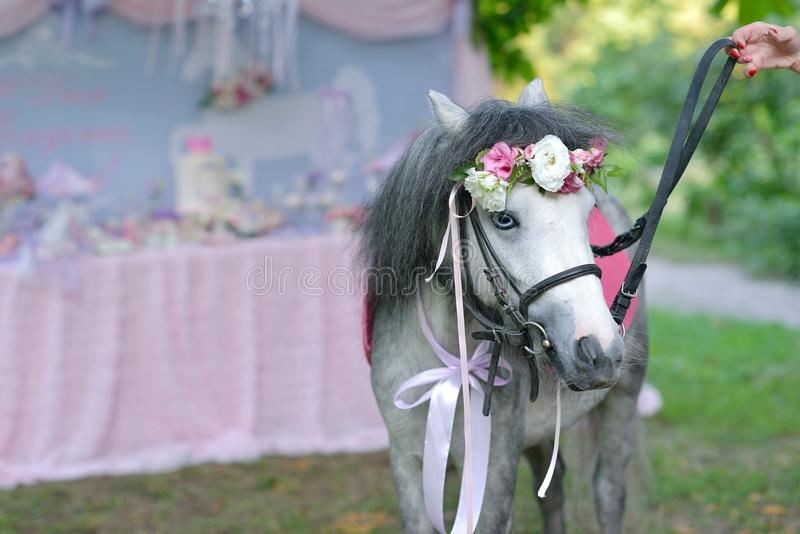 Poney gris images stock