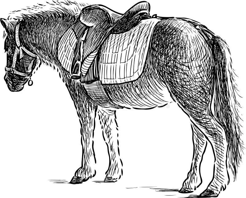 Poney voor horseback het berijden stock illustratie