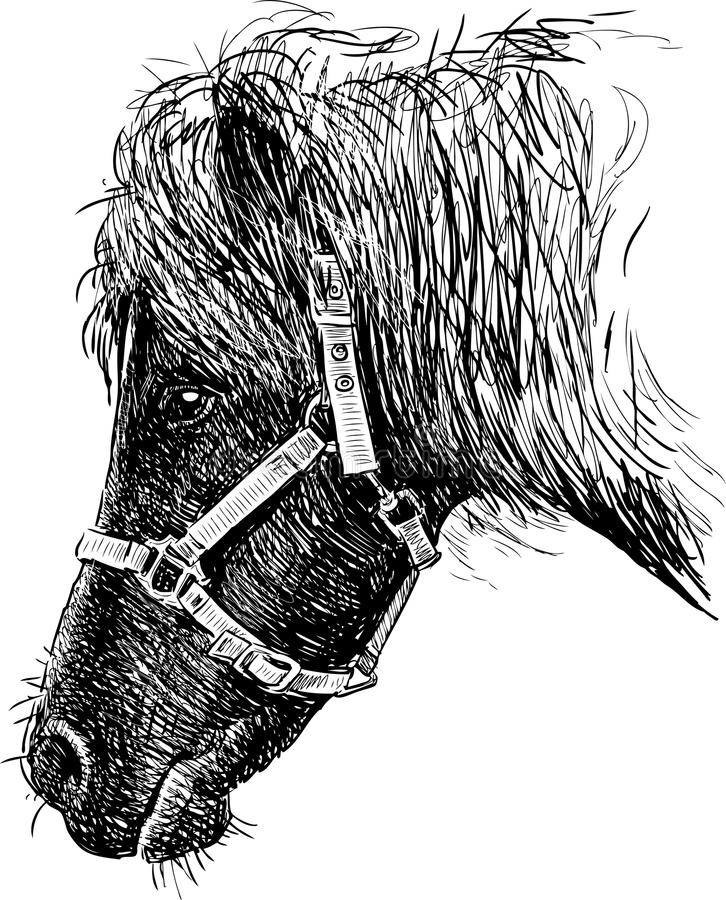Poneyhoofd royalty-vrije illustratie