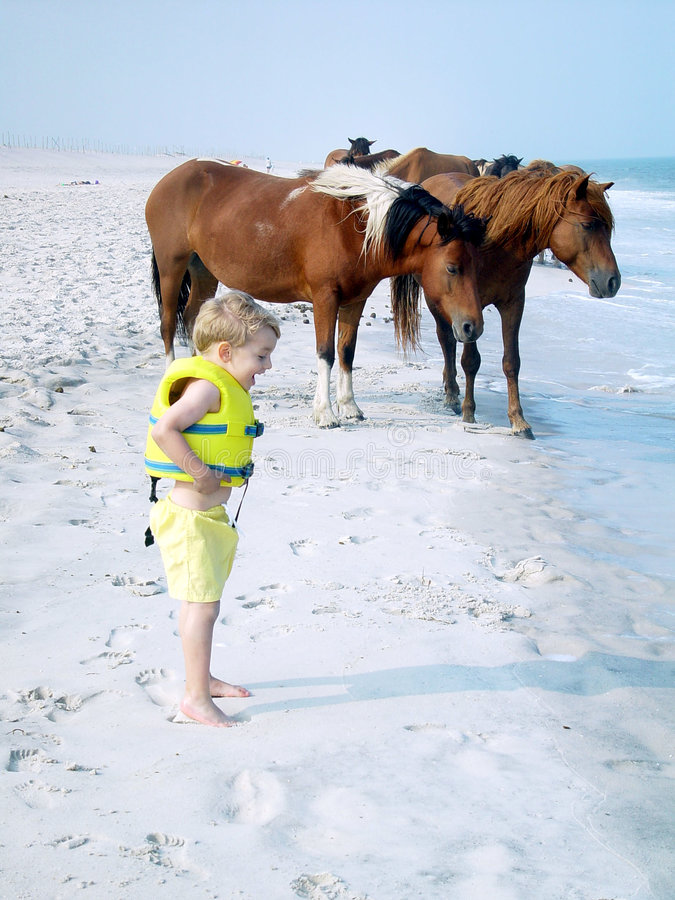Poneys d'Assateague et jeune garçon photographie stock