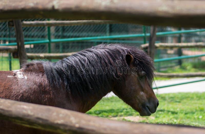 Poneys sauvages dans le zoo photographie stock libre de droits