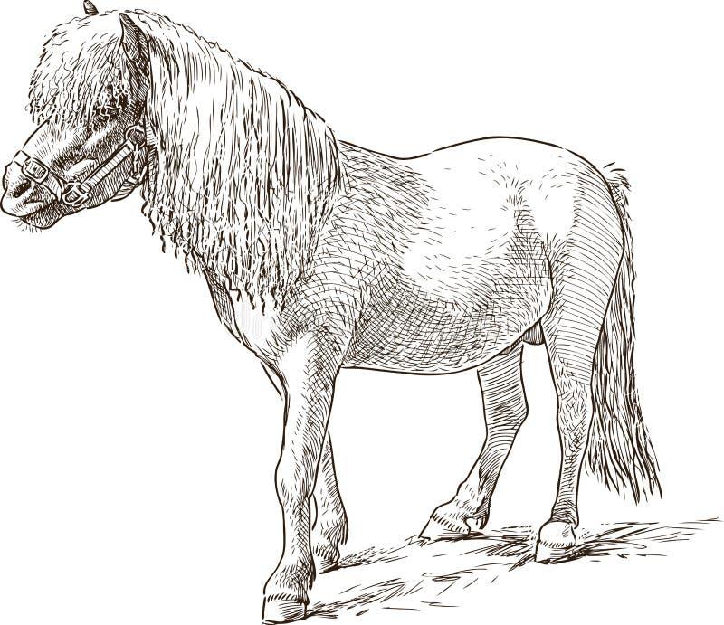 Poneyschets vector illustratie