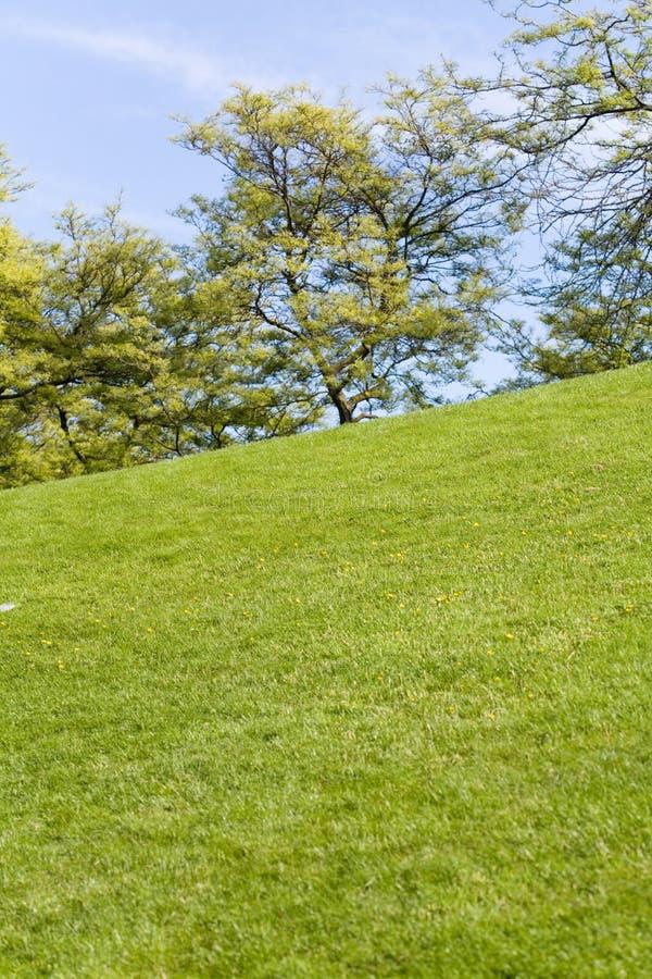 Ponga verde el césped y el árbol fotos de archivo libres de regalías
