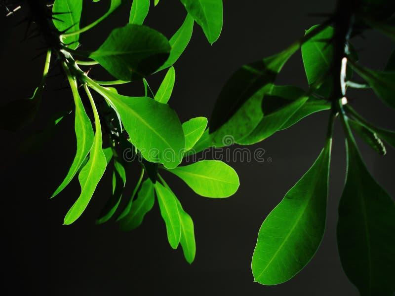 Ponga verde la flor foto de archivo