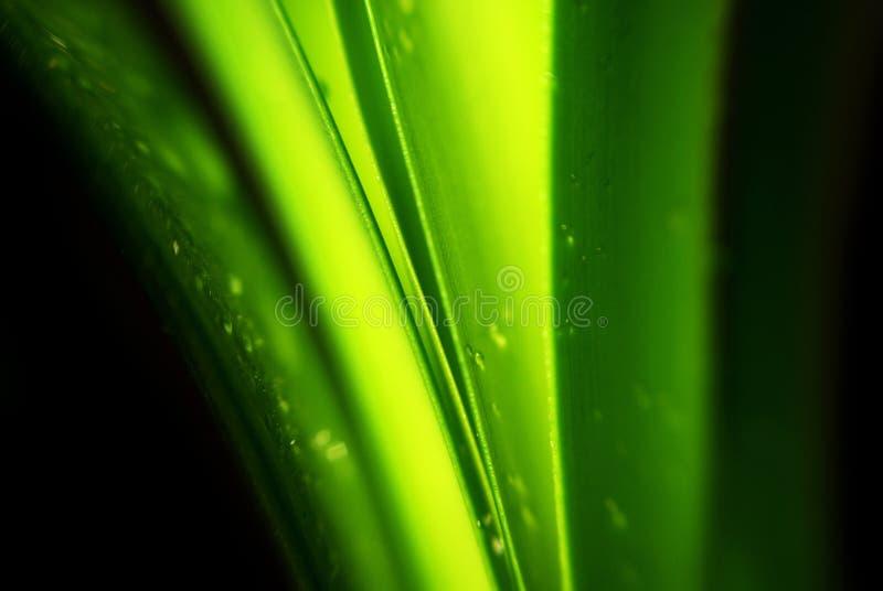 Ponga verde la hoja imagen de archivo