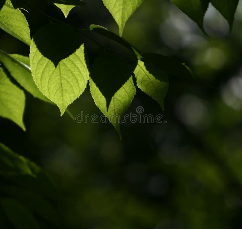 Ponga verde las hojas fotos de archivo