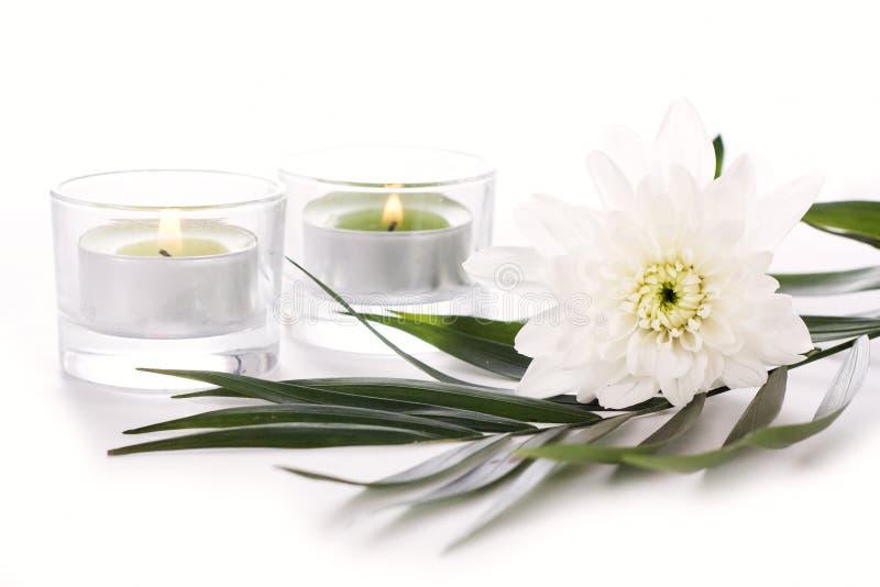 Ponga verde las velas y las margaritas cerca de la reflexión del agua imágenes de archivo libres de regalías