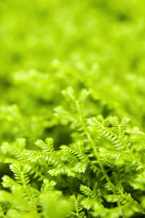 Ponga verde los helechos foto de archivo