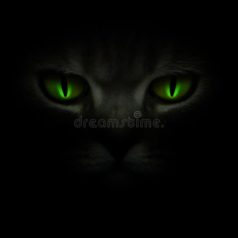 Ponga verde los ojos de gato que brillan intensamente en la obscuridad imagen de archivo libre de regalías