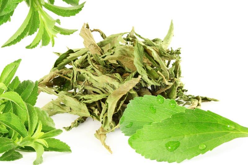 ponga verde y secó las hojas del rebaudiana del Stevia en el fondo blanco fotos de archivo