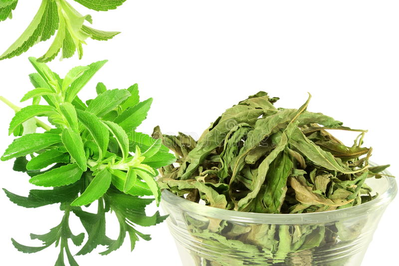ponga verde y secó las hojas del rebaudiana del Stevia en el fondo blanco imagen de archivo libre de regalías