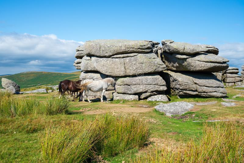 Combestone Tor in Devon. Ponies at Combestone Tor near Hexworthy on Dartmoor National Park in Devon stock photos