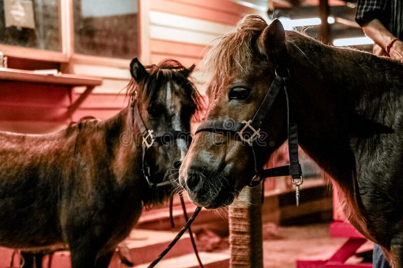 Ponies In Stable Free Public Domain Cc0 Image