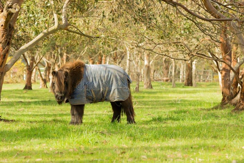 ponny arkivfoto