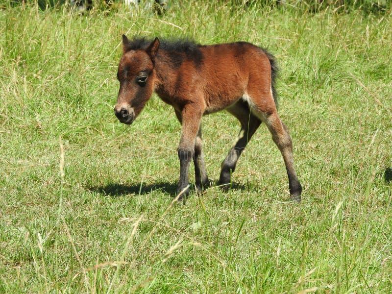 Ponny fotos de stock