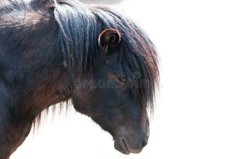 Ponnycloseup royaltyfri fotografi