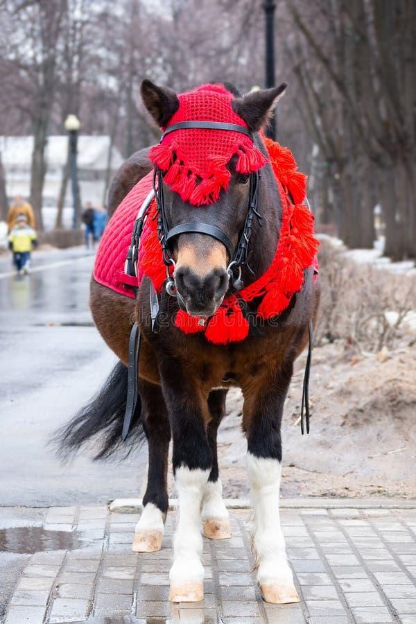 Ponnyn i vinter parkerar arkivfoto