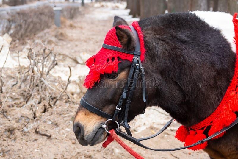 Ponnyn i vinter parkerar arkivbild