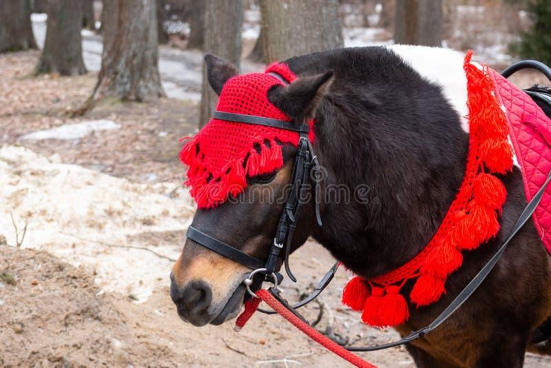 Ponnyn i vinter parkerar royaltyfri foto
