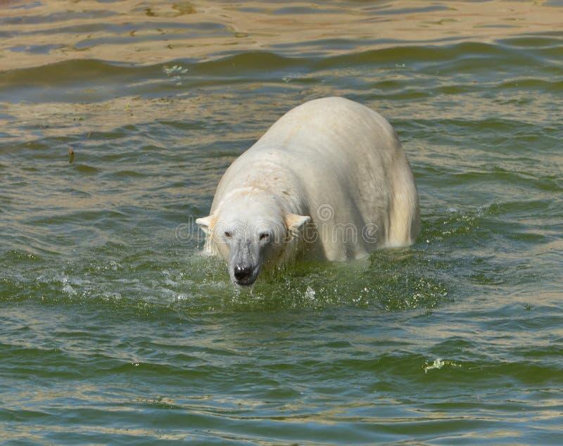 ponoszą polarna wody Fiński Lapland zdjęcia royalty free