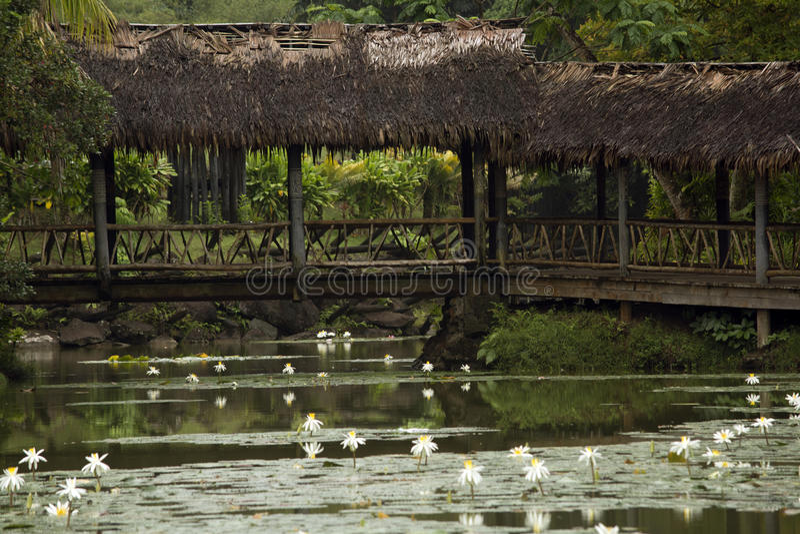 Pont à travers un étang, Fidji photo libre de droits