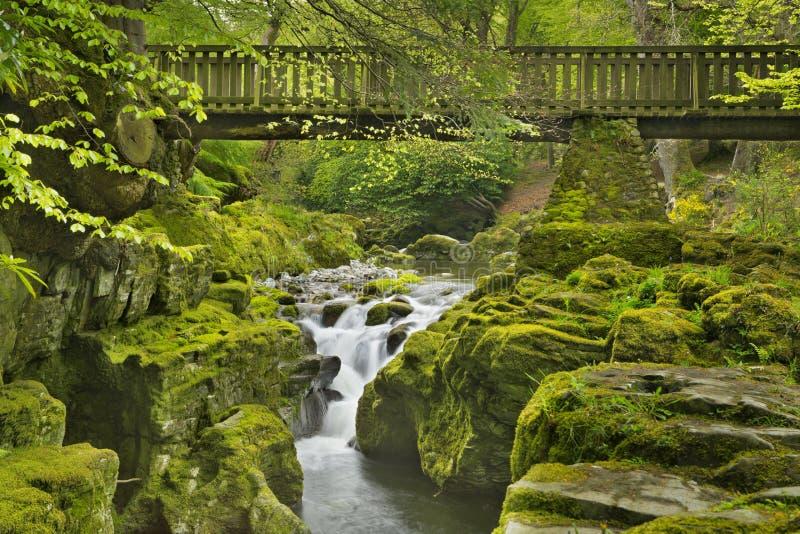 Pont au-dessus d'une rivière par la forêt luxuriante en Irlande du Nord images libres de droits