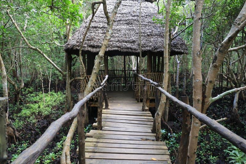 Pont au pavillon dans la forêt de palétuvier images libres de droits