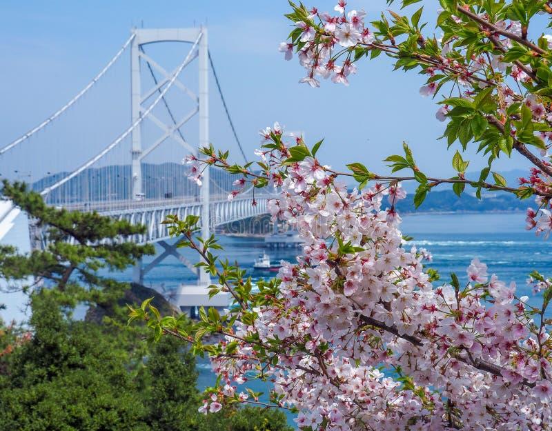 Pont avec des fleurs de cerisier photographie stock