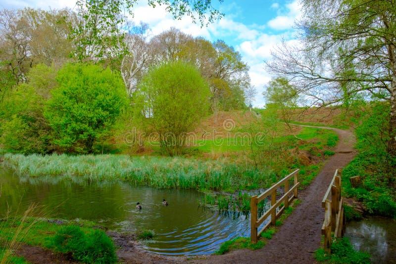 Pont d'étang de ravin image stock