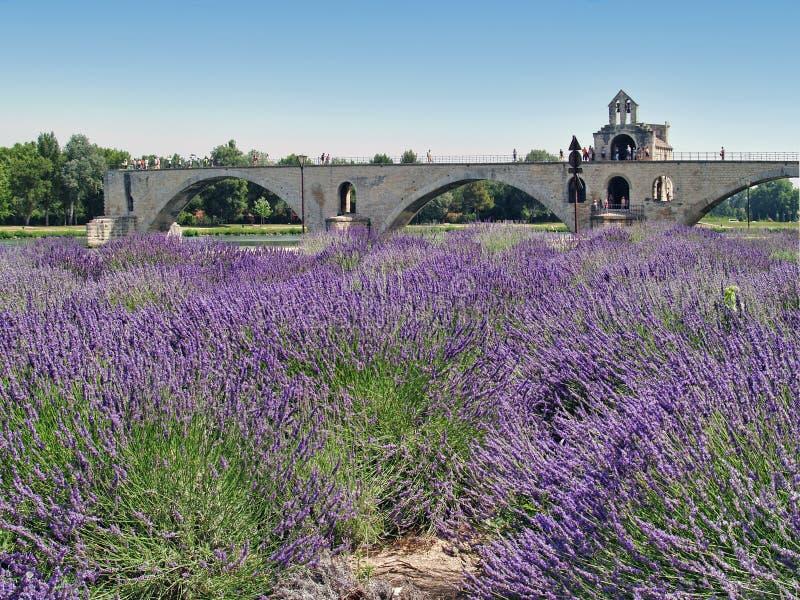 Pont d'avignon fotografia royalty free