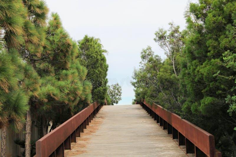 Pont d'en bois contresigné avec le pin image stock