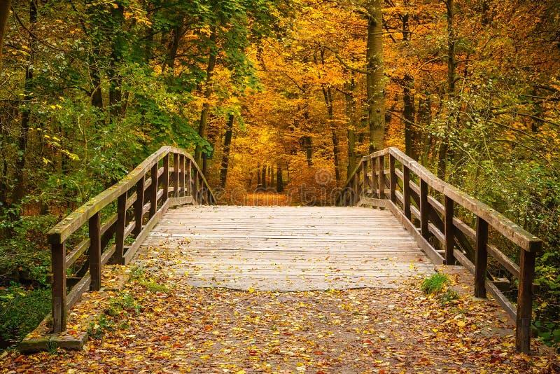 Download Pont Dans La Forêt D'automne Photo stock - Image du environnement, feuillage: 45359626