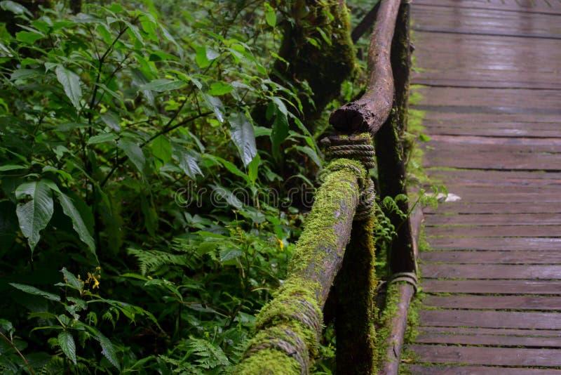 Pont dans la forêt, Doi Intanon, chiangmai, Thaïlande photographie stock