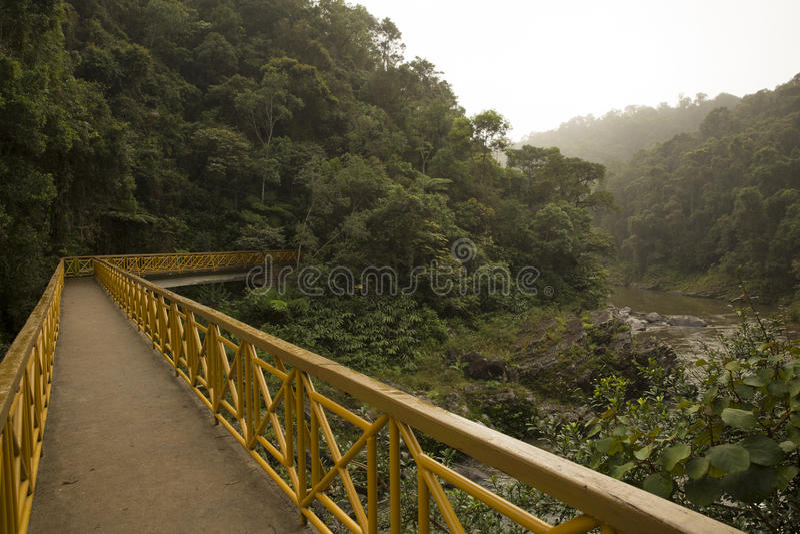 Pont dans la jungle image stock