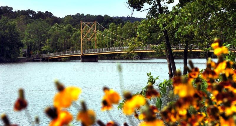 Pont de castor de ` de l'Arkansas image libre de droits