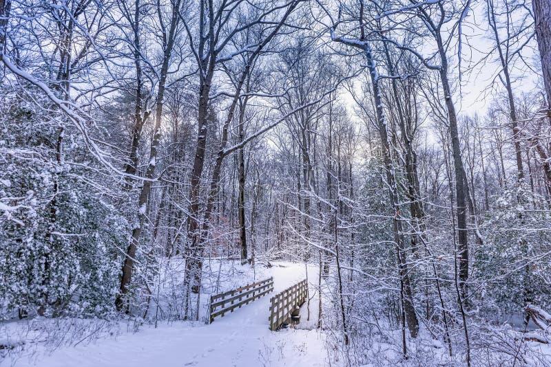 Pont de marche en bois dans une forêt congelée couverte dans la neige pendant l'hiver photos stock