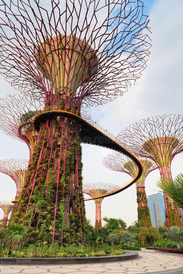 Pont de marche sur les arbres superbes dans les jardins par la baie Singapour photo libre de droits