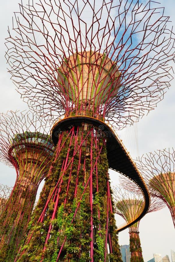 Pont de marche sur les arbres superbes dans les jardins par la baie Singapour image libre de droits