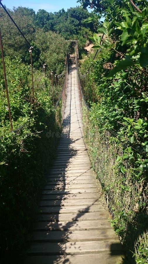 Pont de singe photo stock