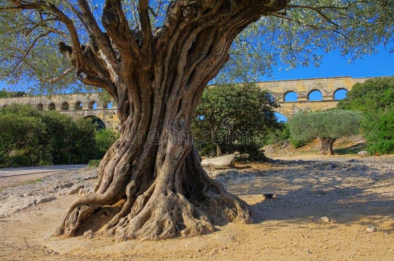 Pont du Gard arkivbild