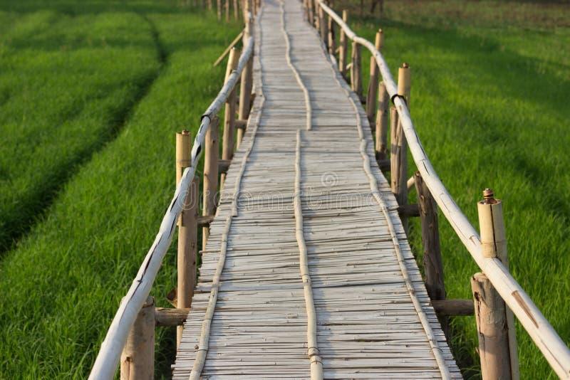 Pont en bambou avec le fond de gisement de riz images libres de droits